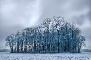 1408255_trees_in_foggy_winter_landscape.jpg
