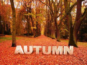 996925_autumn_concept.jpg