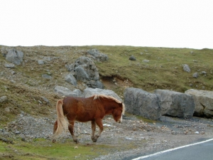 horseroad.jpg
