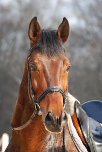 the-horse-1439653-m.jpg