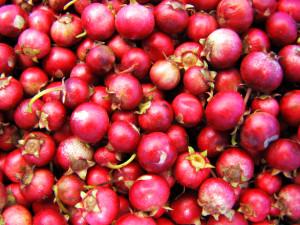 cranberries-1328106